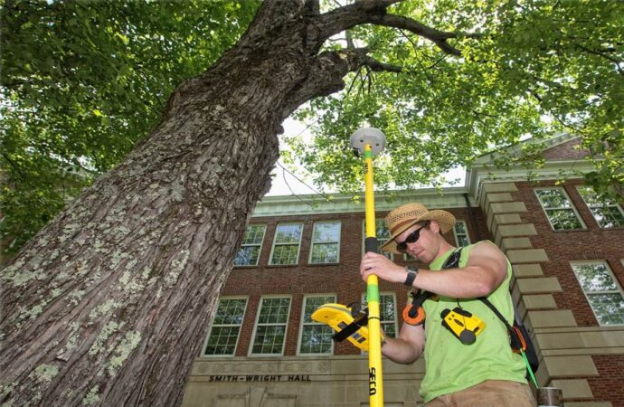 Arborist Consultations-Springfield Tree Trimming and Stump Grinding Services-We Offer Tree Trimming Services, Tree Removal, Tree Pruning, Tree Cutting, Residential and Commercial Tree Trimming Services, Storm Damage, Emergency Tree Removal, Land Clearing, Tree Companies, Tree Care Service, Stump Grinding, and we're the Best Tree Trimming Company Near You Guaranteed!