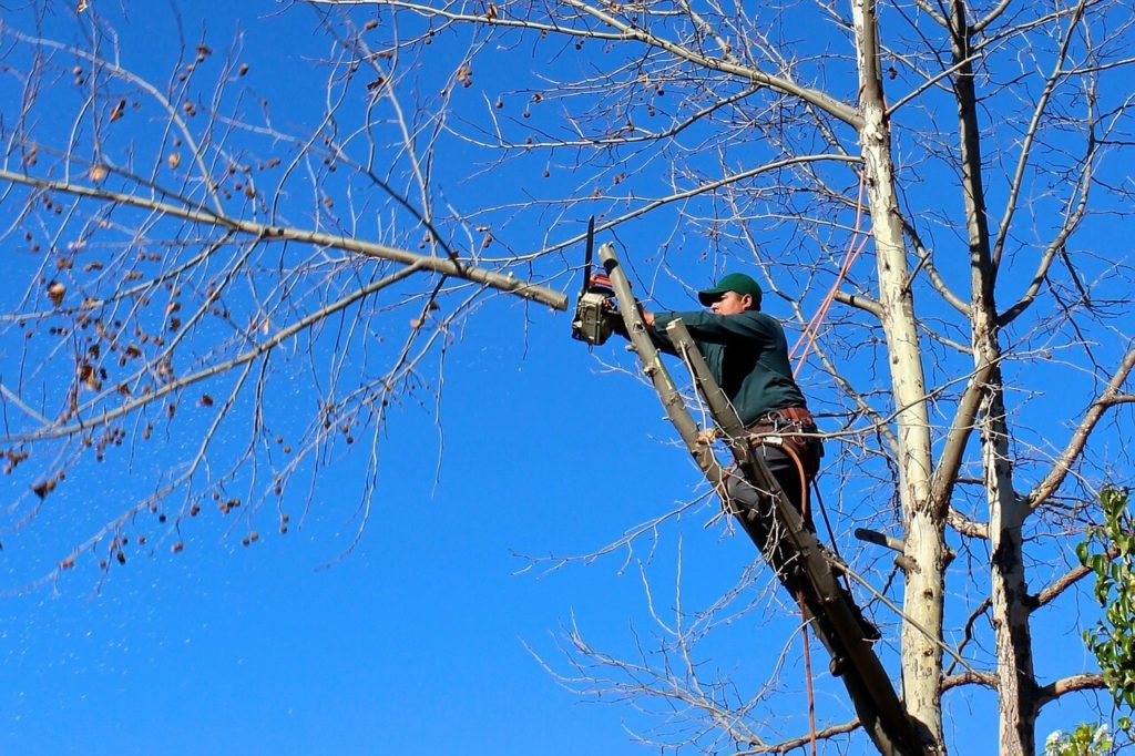 Contact Us-Springfield Tree Trimming and Stump Grinding Services-We Offer Tree Trimming Services, Tree Removal, Tree Pruning, Tree Cutting, Residential and Commercial Tree Trimming Services, Storm Damage, Emergency Tree Removal, Land Clearing, Tree Companies, Tree Care Service, Stump Grinding, and we're the Best Tree Trimming Company Near You Guaranteed!