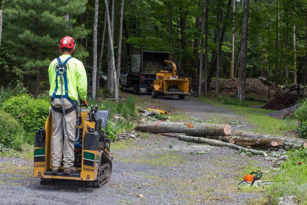 Emergency Tree Removal-Springfield Tree Trimming and Stump Grinding Services-We Offer Tree Trimming Services, Tree Removal, Tree Pruning, Tree Cutting, Residential and Commercial Tree Trimming Services, Storm Damage, Emergency Tree Removal, Land Clearing, Tree Companies, Tree Care Service, Stump Grinding, and we're the Best Tree Trimming Company Near You Guaranteed!