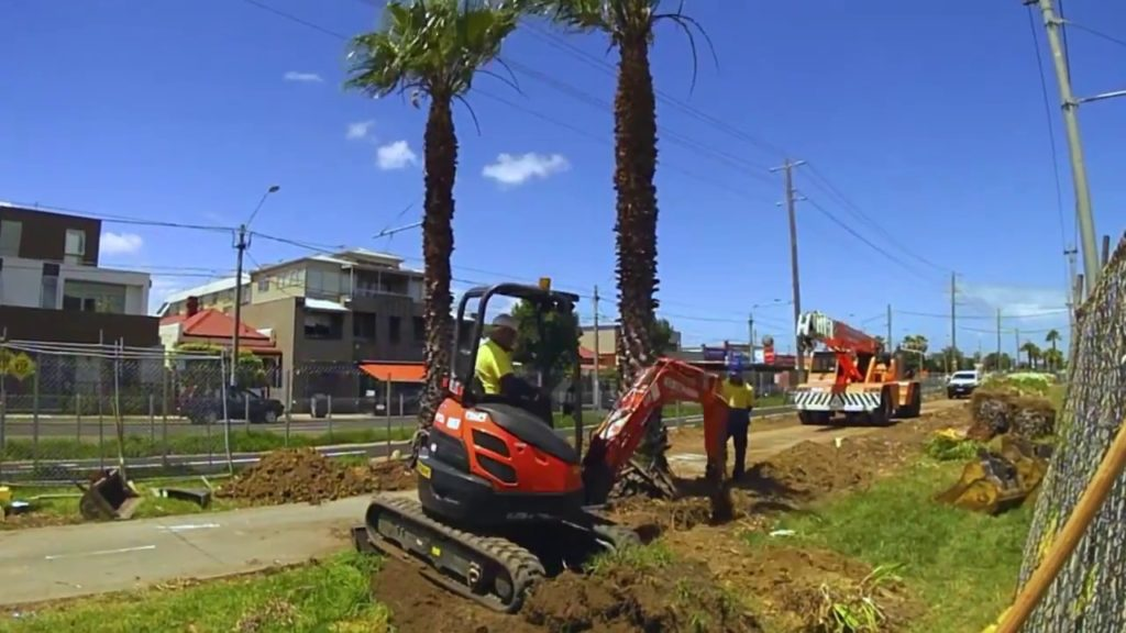 Palm Tree Removal-Springfield Tree Trimming and Stump Grinding Services-We Offer Tree Trimming Services, Tree Removal, Tree Pruning, Tree Cutting, Residential and Commercial Tree Trimming Services, Storm Damage, Emergency Tree Removal, Land Clearing, Tree Companies, Tree Care Service, Stump Grinding, and we're the Best Tree Trimming Company Near You Guaranteed!