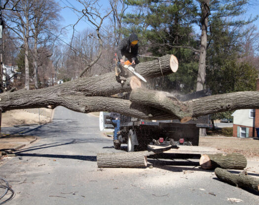 Residential Tree Services-Springfield Tree Trimming and Stump Grinding Services-We Offer Tree Trimming Services, Tree Removal, Tree Pruning, Tree Cutting, Residential and Commercial Tree Trimming Services, Storm Damage, Emergency Tree Removal, Land Clearing, Tree Companies, Tree Care Service, Stump Grinding, and we're the Best Tree Trimming Company Near You Guaranteed!