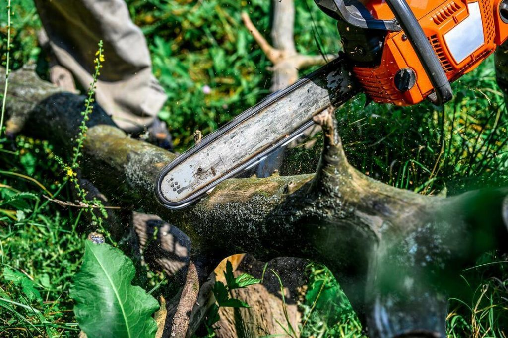 Services-Springfield Tree Trimming and Stump Grinding Services-We Offer Tree Trimming Services, Tree Removal, Tree Pruning, Tree Cutting, Residential and Commercial Tree Trimming Services, Storm Damage, Emergency Tree Removal, Land Clearing, Tree Companies, Tree Care Service, Stump Grinding, and we're the Best Tree Trimming Company Near You Guaranteed!