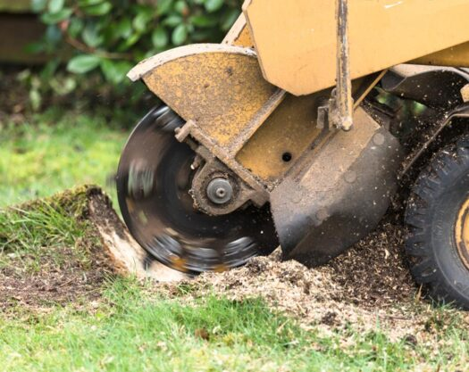Stump Grinding-Springfield Tree Trimming and Stump Grinding Services-We Offer Tree Trimming Services, Tree Removal, Tree Pruning, Tree Cutting, Residential and Commercial Tree Trimming Services, Storm Damage, Emergency Tree Removal, Land Clearing, Tree Companies, Tree Care Service, Stump Grinding, and we're the Best Tree Trimming Company Near You Guaranteed!