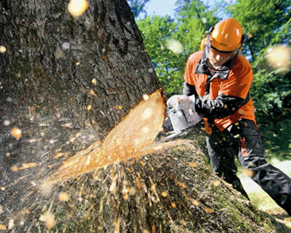 Tree Cutting-Springfield Tree Trimming and Stump Grinding Services-We Offer Tree Trimming Services, Tree Removal, Tree Pruning, Tree Cutting, Residential and Commercial Tree Trimming Services, Storm Damage, Emergency Tree Removal, Land Clearing, Tree Companies, Tree Care Service, Stump Grinding, and we're the Best Tree Trimming Company Near You Guaranteed!