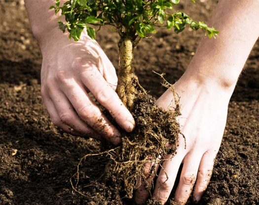 Tree Planting-Springfield Tree Trimming and Stump Grinding Services-We Offer Tree Trimming Services, Tree Removal, Tree Pruning, Tree Cutting, Residential and Commercial Tree Trimming Services, Storm Damage, Emergency Tree Removal, Land Clearing, Tree Companies, Tree Care Service, Stump Grinding, and we're the Best Tree Trimming Company Near You Guaranteed!