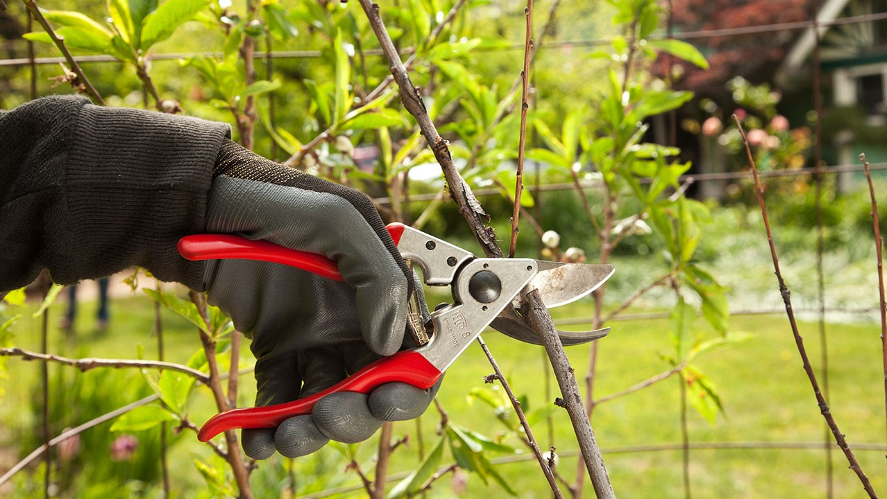 Tree Pruning-Springfield Tree Trimming and Stump Grinding Services-We Offer Tree Trimming Services, Tree Removal, Tree Pruning, Tree Cutting, Residential and Commercial Tree Trimming Services, Storm Damage, Emergency Tree Removal, Land Clearing, Tree Companies, Tree Care Service, Stump Grinding, and we're the Best Tree Trimming Company Near You Guaranteed!