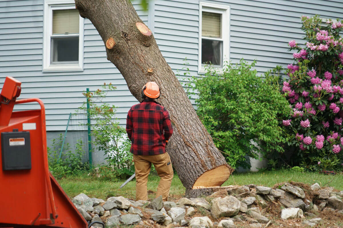 Tree Removal-Springfield Tree Trimming and Stump Grinding Services-We Offer Tree Trimming Services, Tree Removal, Tree Pruning, Tree Cutting, Residential and Commercial Tree Trimming Services, Storm Damage, Emergency Tree Removal, Land Clearing, Tree Companies, Tree Care Service, Stump Grinding, and we're the Best Tree Trimming Company Near You Guaranteed!
