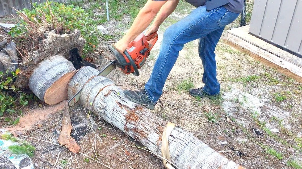 Ozark-Springfield Tree Trimming and Stump Grinding Services-We Offer Tree Trimming Services, Tree Removal, Tree Pruning, Tree Cutting, Residential and Commercial Tree Trimming Services, Storm Damage, Emergency Tree Removal, Land Clearing, Tree Companies, Tree Care Service, Stump Grinding, and we're the Best Tree Trimming Company Near You Guaranteed!