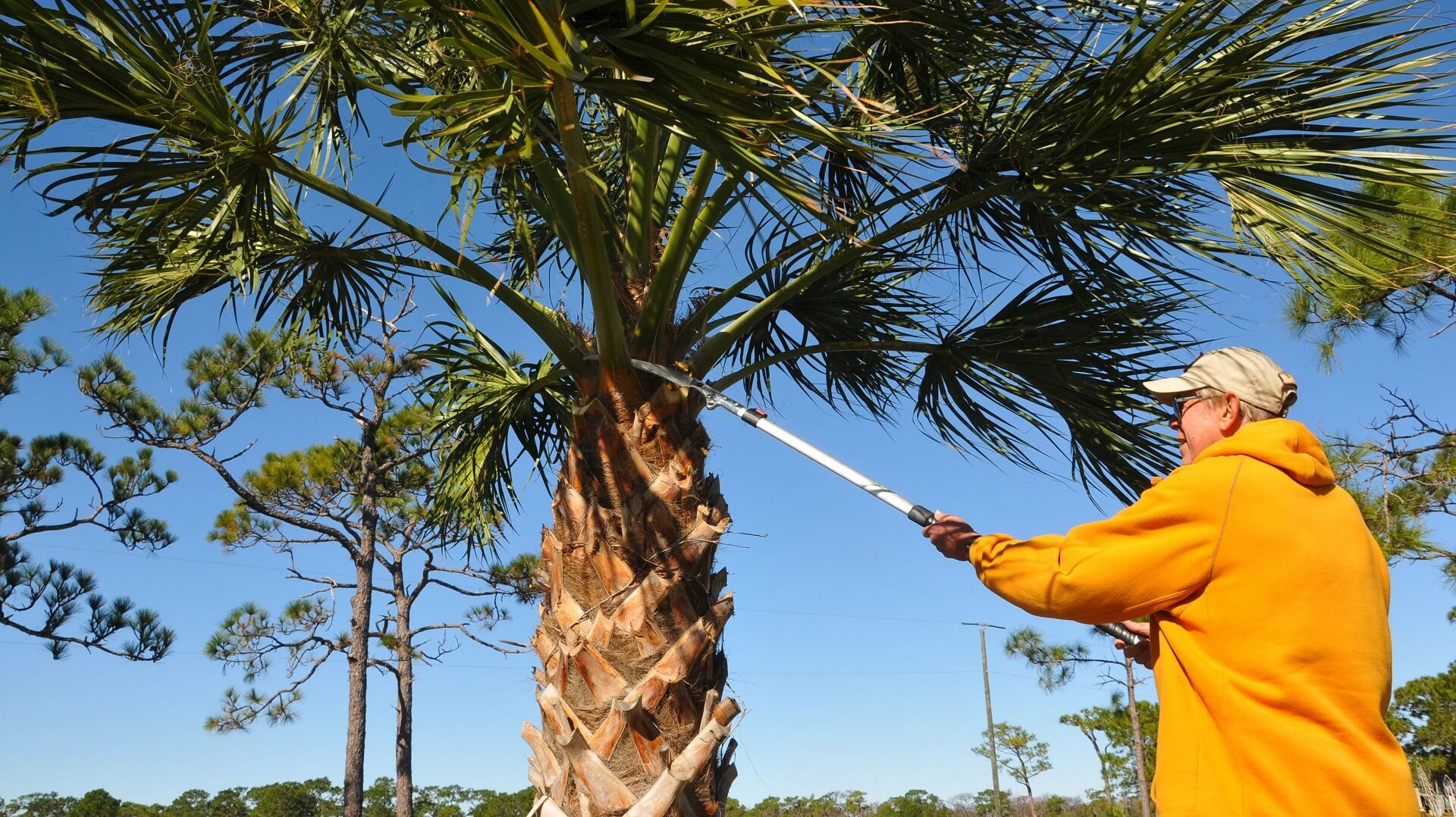 Willard-Springfield Tree Trimming and Stump Grinding Services-We Offer Tree Trimming Services, Tree Removal, Tree Pruning, Tree Cutting, Residential and Commercial Tree Trimming Services, Storm Damage, Emergency Tree Removal, Land Clearing, Tree Companies, Tree Care Service, Stump Grinding, and we're the Best Tree Trimming Company Near You Guaranteed!
